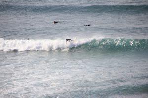 Surfen in Portugal, Surfer Portugal, Surftrip nach Portugal